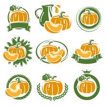 Pumpkin Labels And Elements Set. Vector