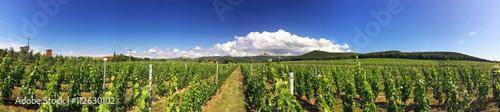 Papiers peints Vignoble Tuscany vineyards, Italy
