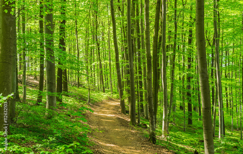fototapeta na drzwi i meble Wald Weg Wanderung Freizeit Erholung