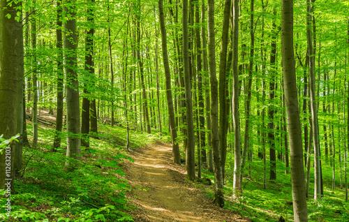 obraz PCV Wald Weg Wanderung Freizeit Erholung