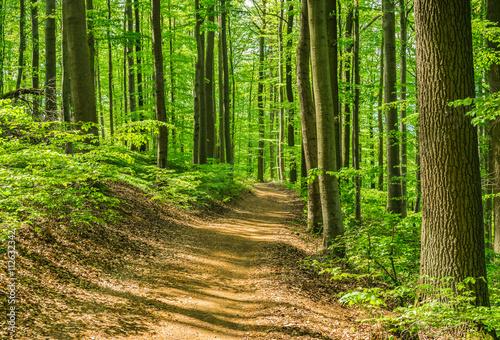 Spoed Foto op Canvas Weg in bos Wald Pfad Weg Laubbäume