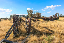 Old Run Down Wooden Cattle Race In Dry Paddock. Australia.