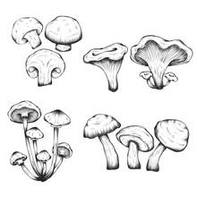 Vector Hand Drawn Illustrations Of Mushrooms Set