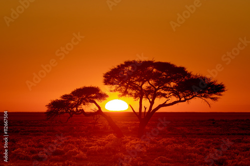 Staande foto Rood paars Sunrise through an Acacia tree, Etosha National Park, Namibia