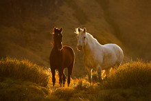 Horses On The Patagonian Steppe, Argentina