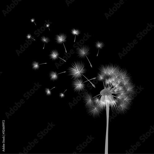 bialy-dandelion-na-czarnym-tle-latajace-zarodniki-pojecie-zyczliwosci-cz