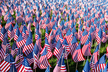 Field Of American Flags On Dis...