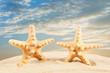 sandy beach. Starfish on the Beach. Summer Time