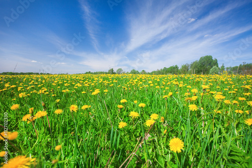 Foto auf Gartenposter Landschappen Yellow flowers field under blue cloudy sky