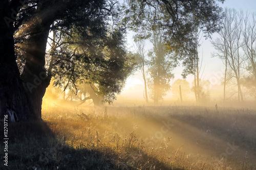 Fototapeta  foggy morning