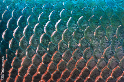 Photo sur Toile Les Textures Fish scale texture for background, Colorful concept