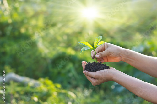 Poster Vegetal Woman was planting new born in garden background