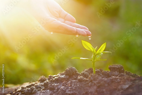 Hand nurturing and watering young plant in sunshine nature background