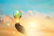 Light Bulb Against Nature On ...