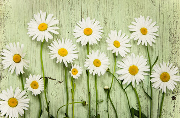 FototapetaChamomile flowers on green wooden rustic background.