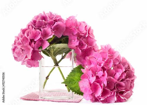hydrangea flowers inside glass vase  sc 1 st  Adobe Stock & hydrangea flowers inside glass vase - Buy this stock photo and ...