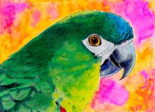Original Painting Of A Green Parrot.
