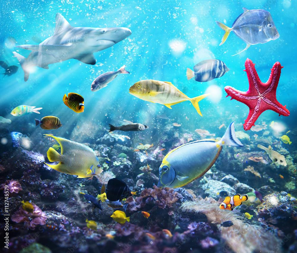 Fototapety, obrazy: Życie morskie, fototapeta 3D