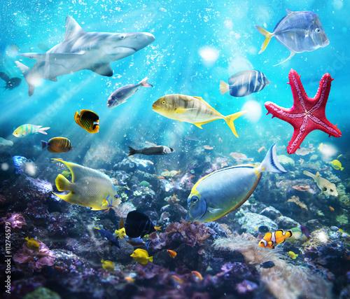 Obraz Życie morskie, fototapeta 3D - fototapety do salonu