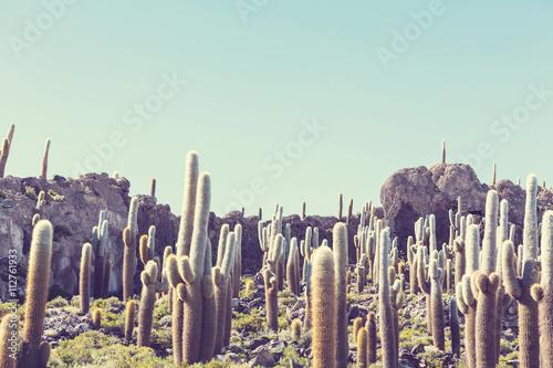 Papiers peints Cactus Cactus in Bolivia