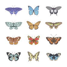 Set Of Realistic Tenderness Butterfly