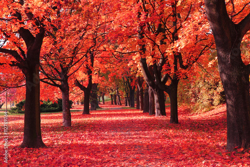 Foto op Canvas Koraal color autumn forest