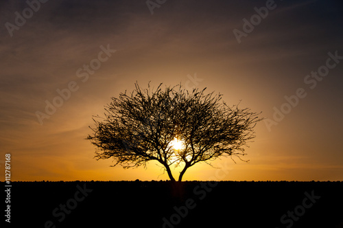 Silhouette of tree in desert at sunset Poster