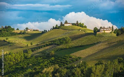 Vineyards of Langhe, Piedmont, UNESCO world heritage Wallpaper Mural