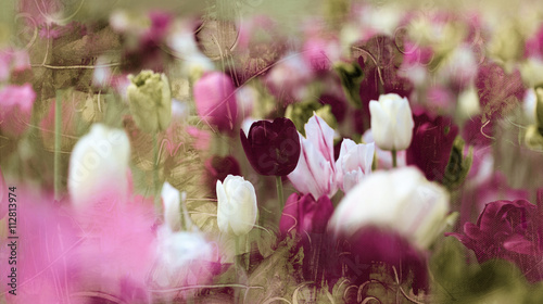 Foto-Duschvorhang - tinted tulips concept