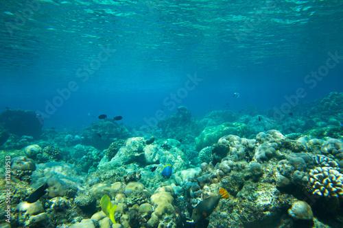 Canvas Prints Textures underwater