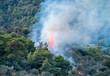 Waldbrand, Forest Fire, Griechenland, Greece 16062.jpg