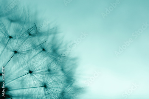 Stickers pour portes Pissenlit Dandelion abstract background. Abstract macro photo of plant se