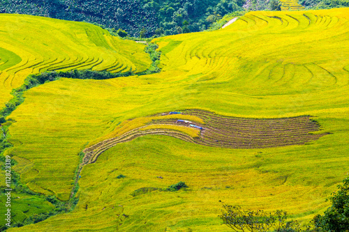 Terraced rice fields in Sapa, Lao Cai, Vietnam Canvas Print