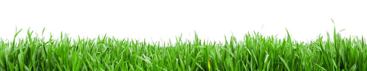 Fototapeta Grass in high definition isolated on a white background