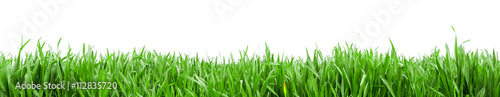 Deurstickers Gras Grass in high definition isolated on a white background