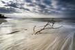 Ostsee im strahlenden Gegenlicht und bewegter See mit umgestürzten Bäumen im Wasser