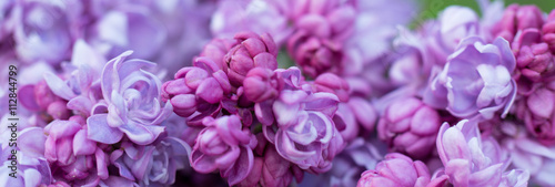 Garden Poster Lilac floral background, red lilac