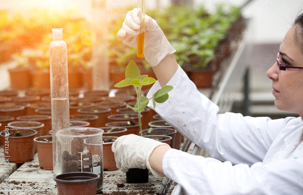 Fototapety, obrazy: Biologist pouring liquid into flower pot with sprout