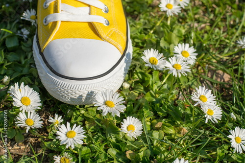 Yellow sneaker in dasiy field