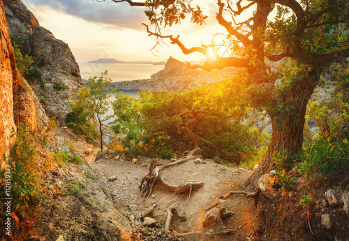 Fotobehang Oranje Sunrise mountain forest. Beautiful colorful landscape in summer. Sunny morning in Crimea.