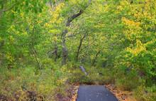 Biking Trail Through Lush Green Trees
