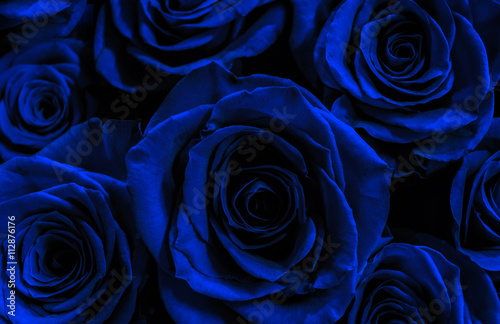 ciemnoniebieskie-roze-odizolowywac-na-czarnym-tle-karta-z-pozdrowieniami-wi
