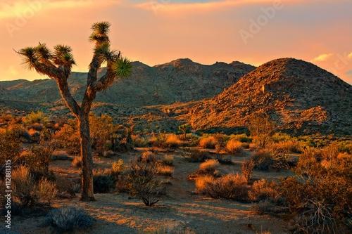 Fotografie, Obraz  Desert landscape of Joshua Tree National Park at sunset, California, USA