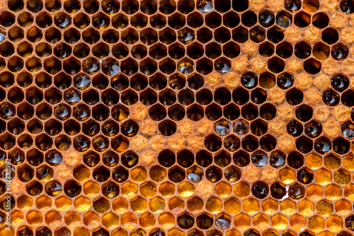 Photo Honeycomb in the beehive