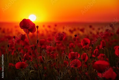 Door stickers Magenta Kwiaty maków na tle zachodzącego słońca