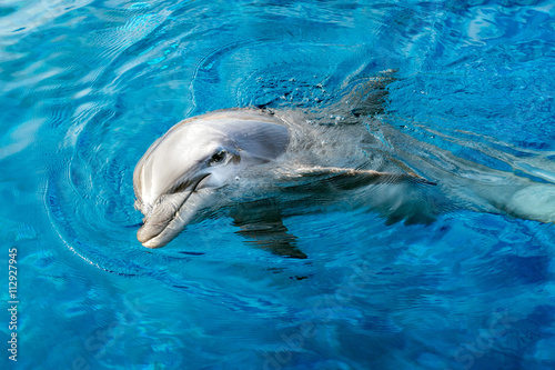Wall Murals Dolphin dolphin smiling eye close up portrait detail