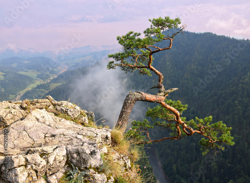 Fototapety, obrazy: View from the top of Sokolica in Pieniny. Poland