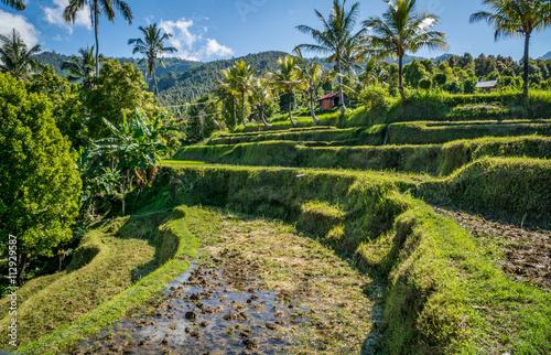Tuinposter Bali Rizière en terrasse, Bali