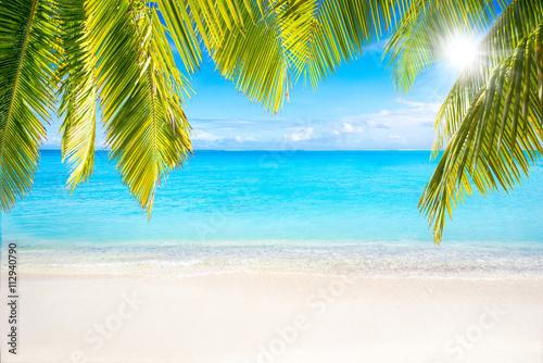 Plakat Plaża z palmami jako tło