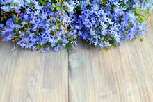 Small Blue Flowers (lobelia) O...